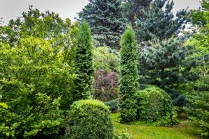 Levensboom in je tuin