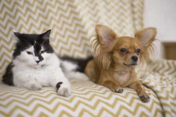 verhuizen met dieren